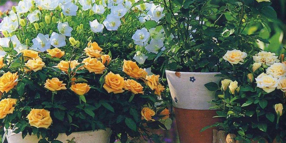 Тенелюбивые и теневыносливые растения в интерьере