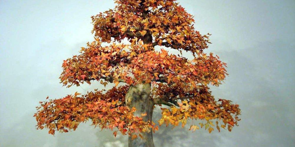 Искусство выращивания карликовых деревьев