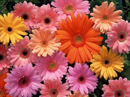 Язык цветов (3)