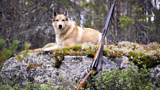 Современная охота - досуг для храбрых2